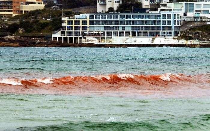Кривавий океан біля берегів Австралії (10 фото)