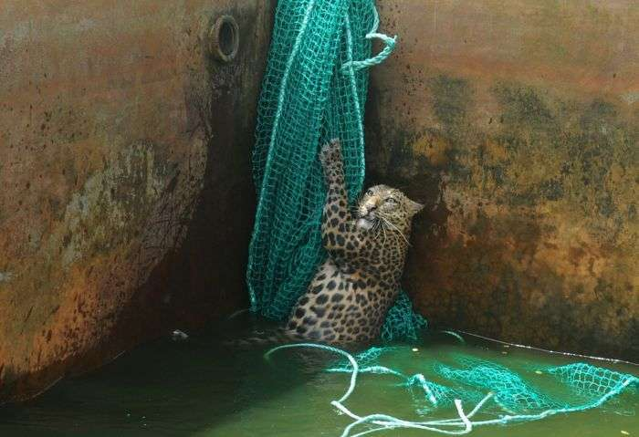 Краща колекція знімків тварин за 2012 року (50 фото)