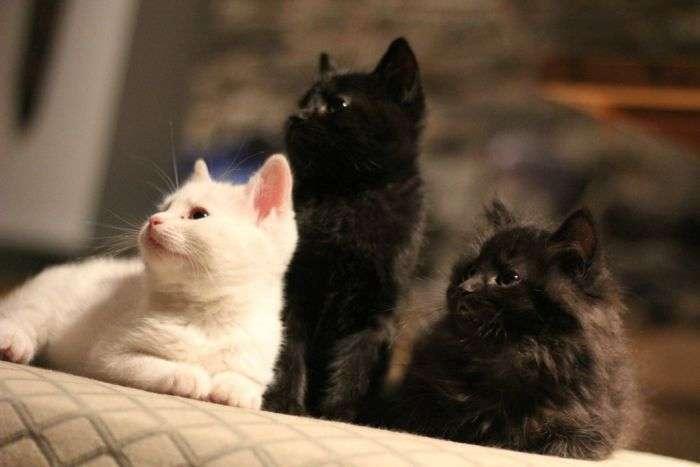 Справжні березневі коти (7 фото)