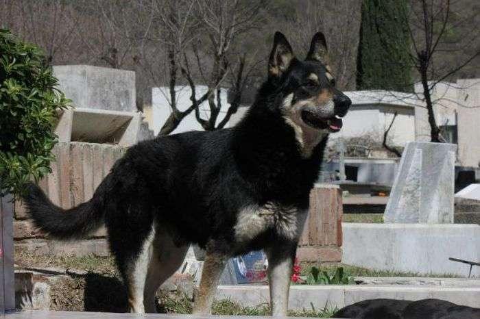 Історія вічної дружби між людиною і собакою (11 фото)