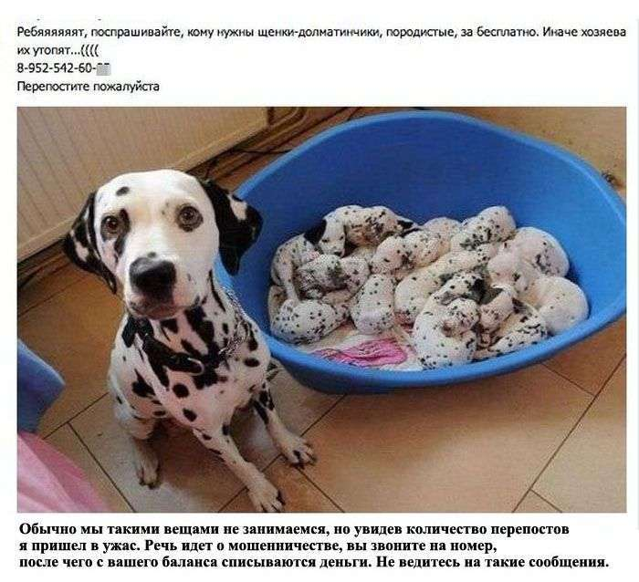 Неправдива інформація з публічних сторінок Вконтакте (14 фото)
