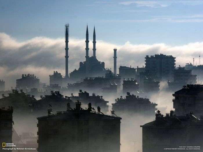 Дивовижний світ, якого ми не помічаємо (46 фото)