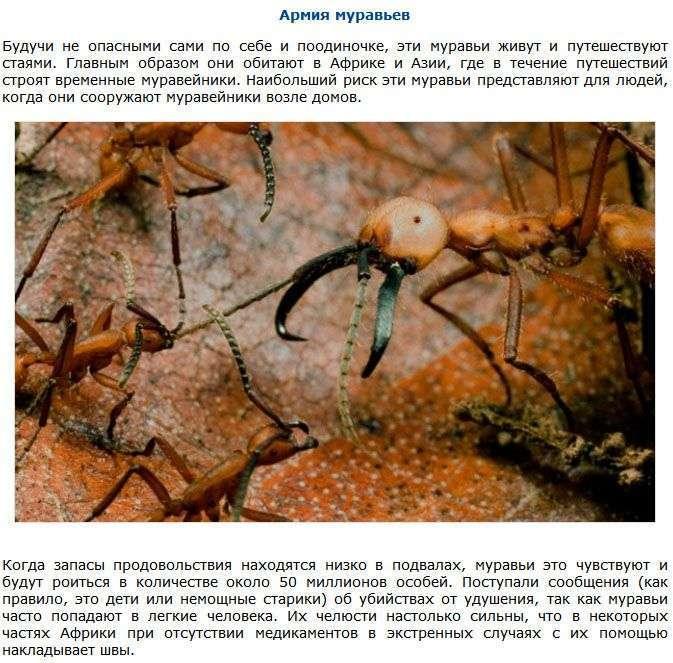 ТОП-9 неймовірно небезпечних істот (9 фото)
