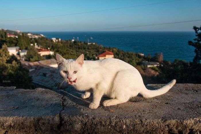 Дуже красиві фотографії. Осінь в Криму та Карпатах (104 фото)