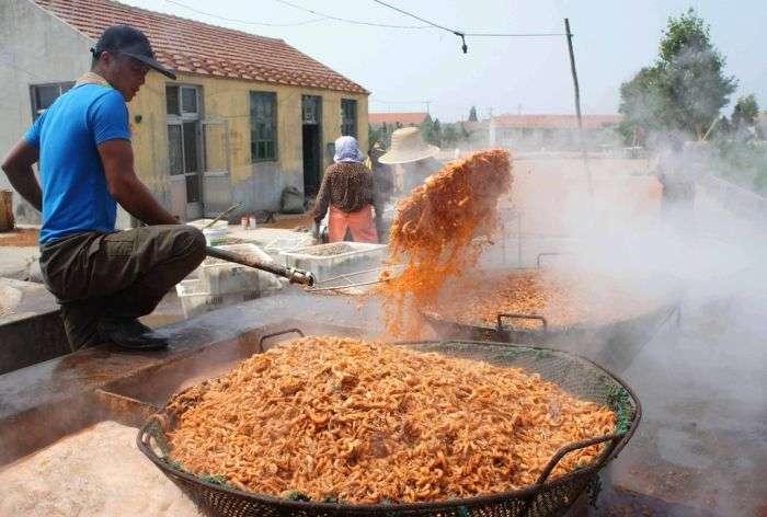 Як до нас поставляють свіжі китайські креветки (8 фото)