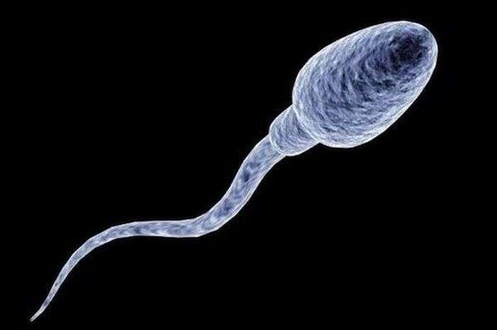 ТОП-6 дивних способів використання сперми (6 картинок)