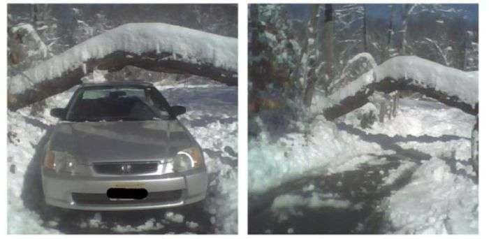 Сильний снігопад призвів до падіння дерева на автомобіль (4 фото)