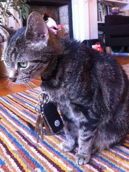 Кіт-мрія будь-якого квартирного злодія (6 фото)