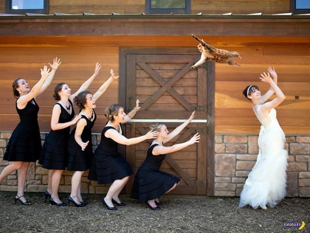 А вы ловили свадебного кота? Интересное