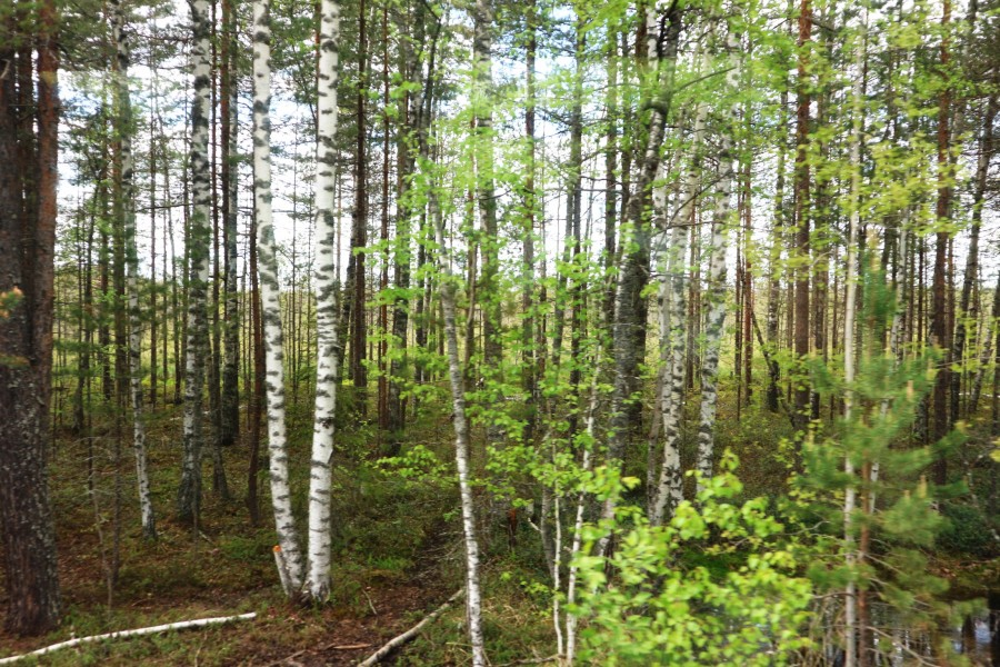 Уходящая натура: на поезде через Тверскую глухомань Тверская область