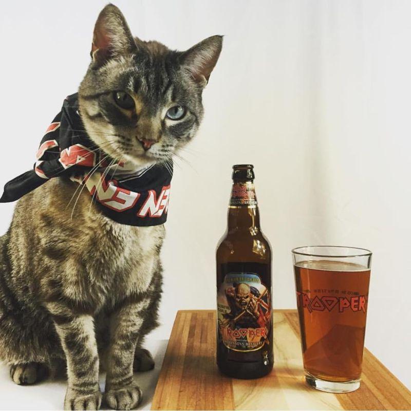 Крутые коты-рокеры Мир Животных