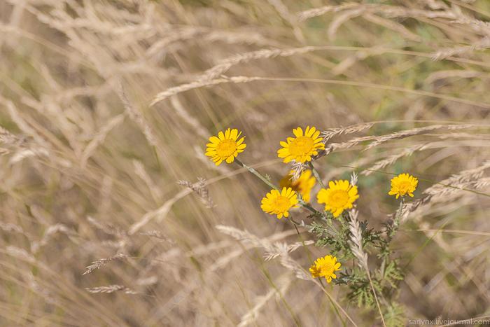 Июнь природа,Саратовская область,цветы,лето