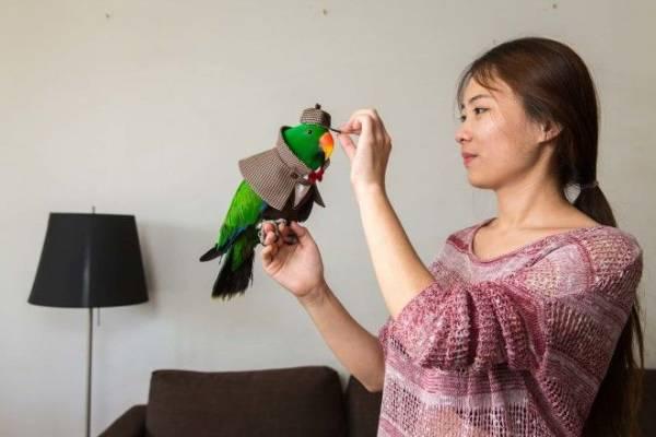 Ослик, суслик, паукан: китайцы и их экзотические питомцы Интересное