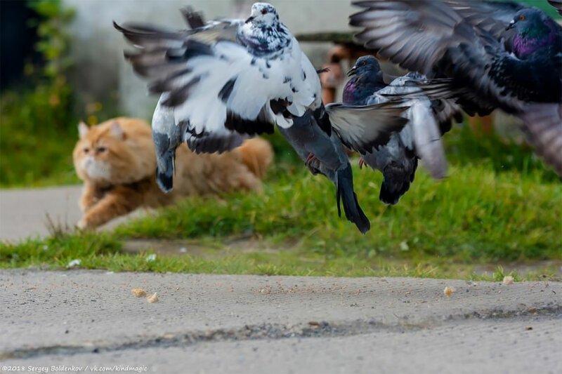 Драматичная история кота Барсика, который не смог   Интересное