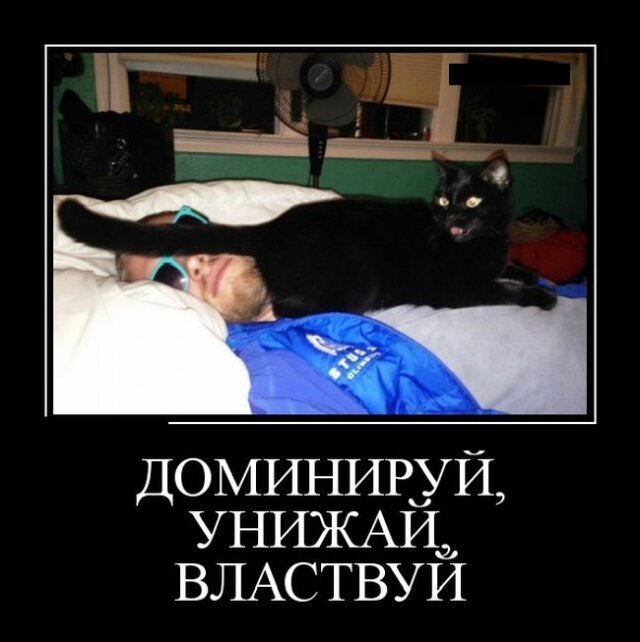 Образ кота в демотиваторах юмор