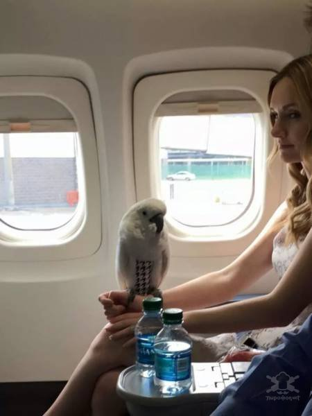 Неожиданные и забавные попутчики в самолете Интересное