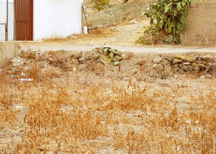 7 глазоразминательных фото «Найди кота»