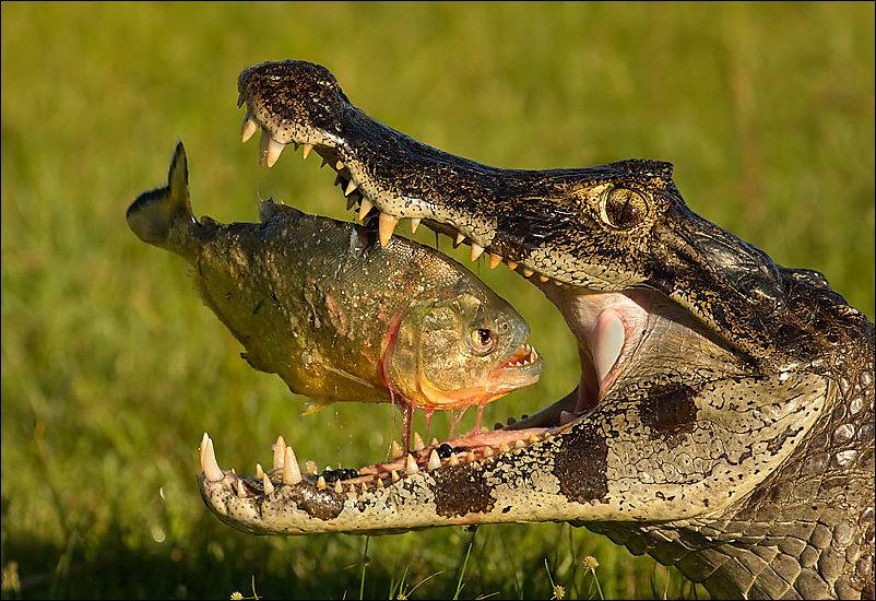 Просто о жизни: про любовь и крокодилов рассказы