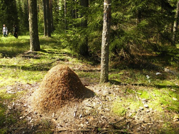 Как егери спасаются от комаров в лесу Путешествия,фото