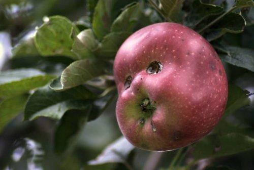 Эти овощи и фрукты — живые! Взгляните и убедитесь из жизни,позитив,Хохмы-байки
