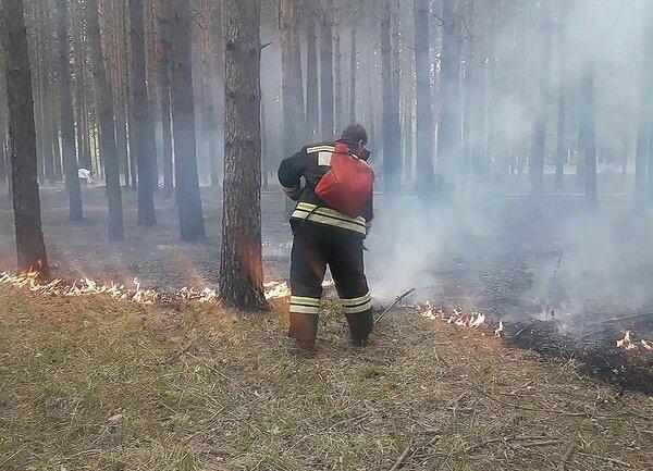 Кто, зачем и в чьих интересах поджигает леса России? россия