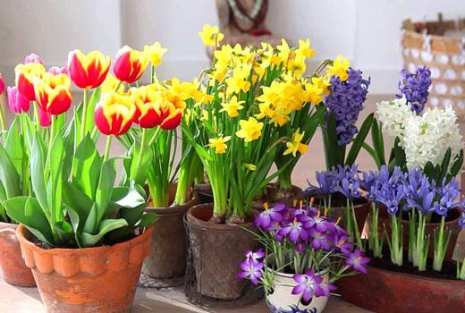 квіти для посадки